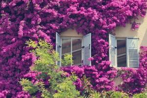 Virágok az új ablak körül