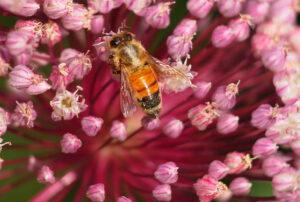 Kiváló minőségű erdei virágméz a webáruházból