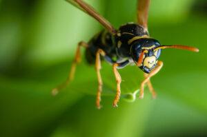 A rovarirtásra nagy szükség van